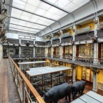 National Museum of Ireland - Natural History. Places to Visit | Dublin, Ireland