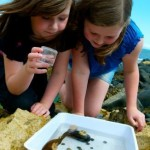 Pond Dipping Carnfunnock Country Park