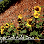 Bangor Castle Walled Garden YouTube