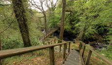 Ness Wood Country Park