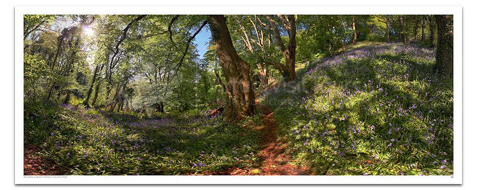 Bluebells in Bloom. Redburn Country Park