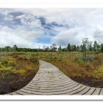 Peatlands Park Bog Walk